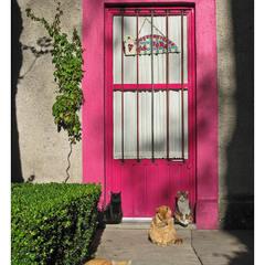 Mexicano gatos