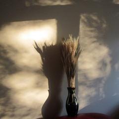 Исчезающие тени