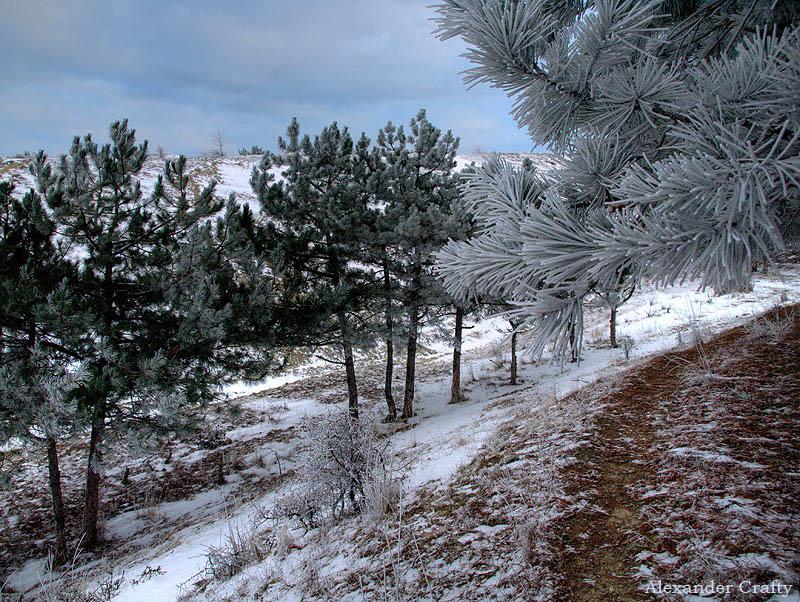 шатуре сосны фото зима амбициозные