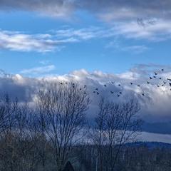 Летять утки....