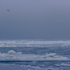 Иногда и Чёрное море замерзает