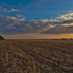 Усталое поле ждёт зиму...