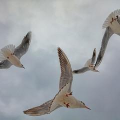 Птички небесные..
