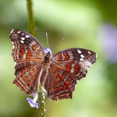 Бабочка из парка Джозани
