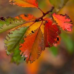 Середина осени