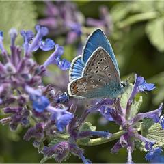 Голубая феерия
