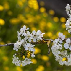 Цвета апреля