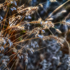 Этюд степных трав