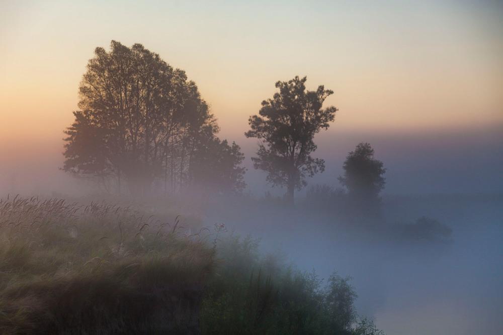 программу она советы для фото в тумане торты сложные закуски