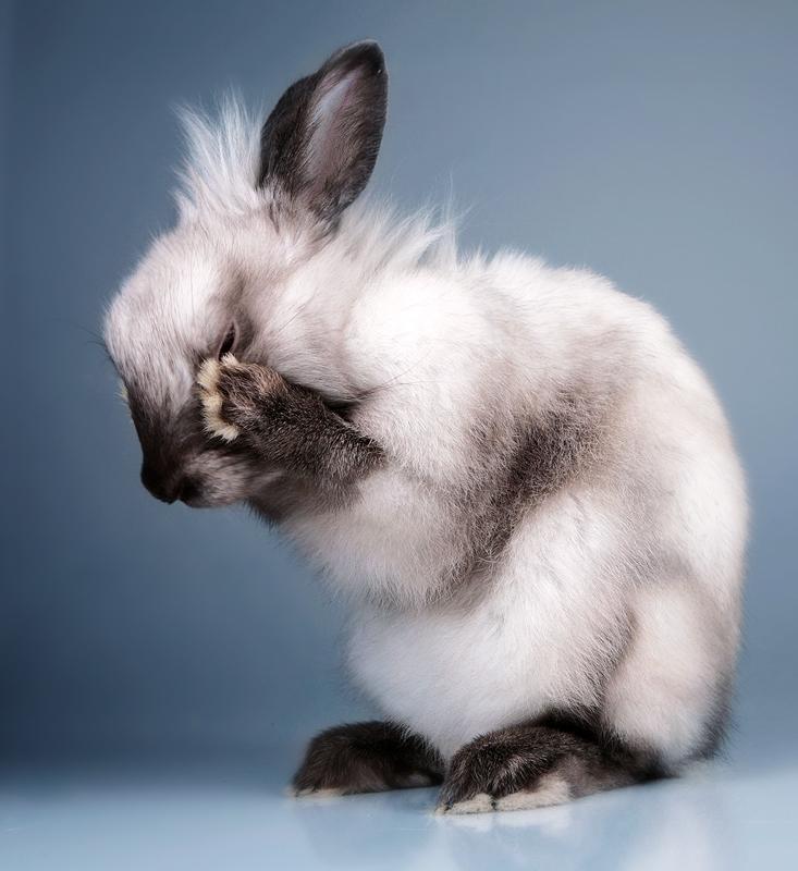 моих сахалинских фото плачущий зайка кролик освещение пути