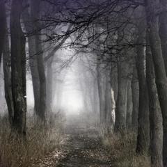 Тайный путь