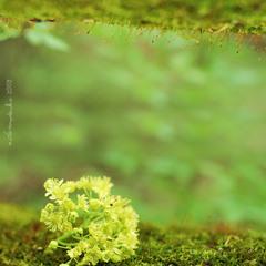 (мій)зачарований ліс