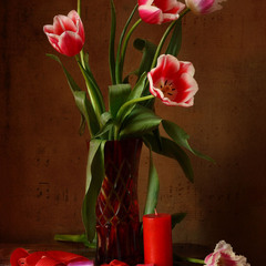 Симфония тюльпанов