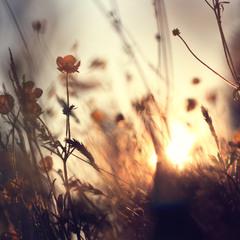 «Прощаючись з сонцем»