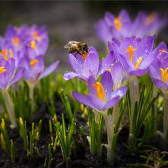 Весна прийшла.