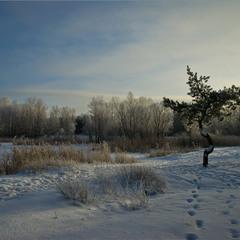 Зимовим ранком.