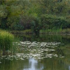 Озерце з рибою.