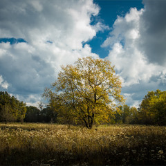 Одинока осінь.