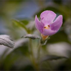 Про маленьку квіточку