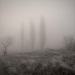 Три тополя на Щемиловке.