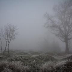 Мурашники і туман.:)