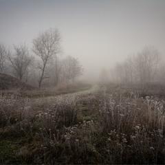 Туман і мегамурашник.:)