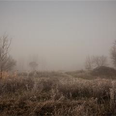 Про туманний ранок.