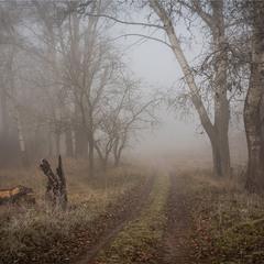 Туманним ранком.