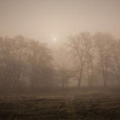 Ранок туманний.
