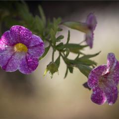 В світі квітів.