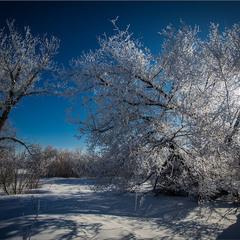 Зимонька -зима.