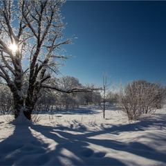 Зимові хроніки.