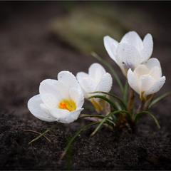 І знову весна.