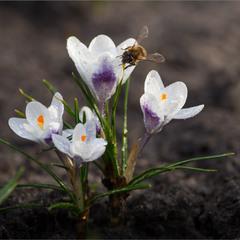 Весна у дворі.