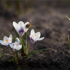 У городі весна.