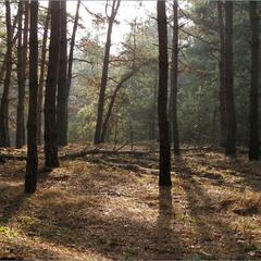 В лісі.