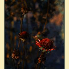 Закат.. Осенние цветы