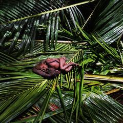 Дитя джунглей