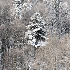 Зимові шати.