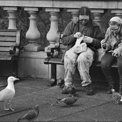 Жадные люди и голодные птицы