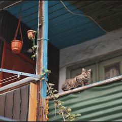 Кот на Молдаванке