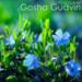 Gosha Gudvin